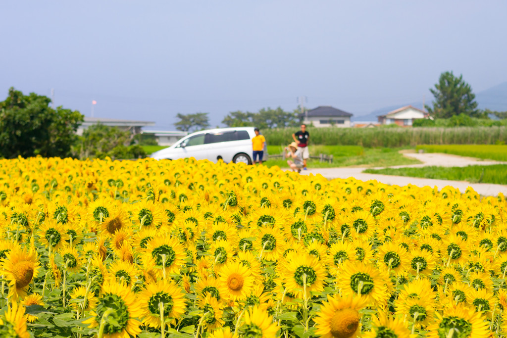 ひまわり畑で撮影