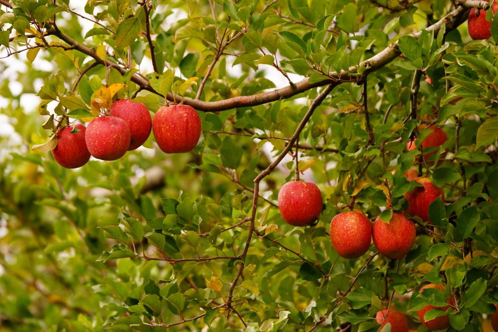 西三川リンゴのさかや農園