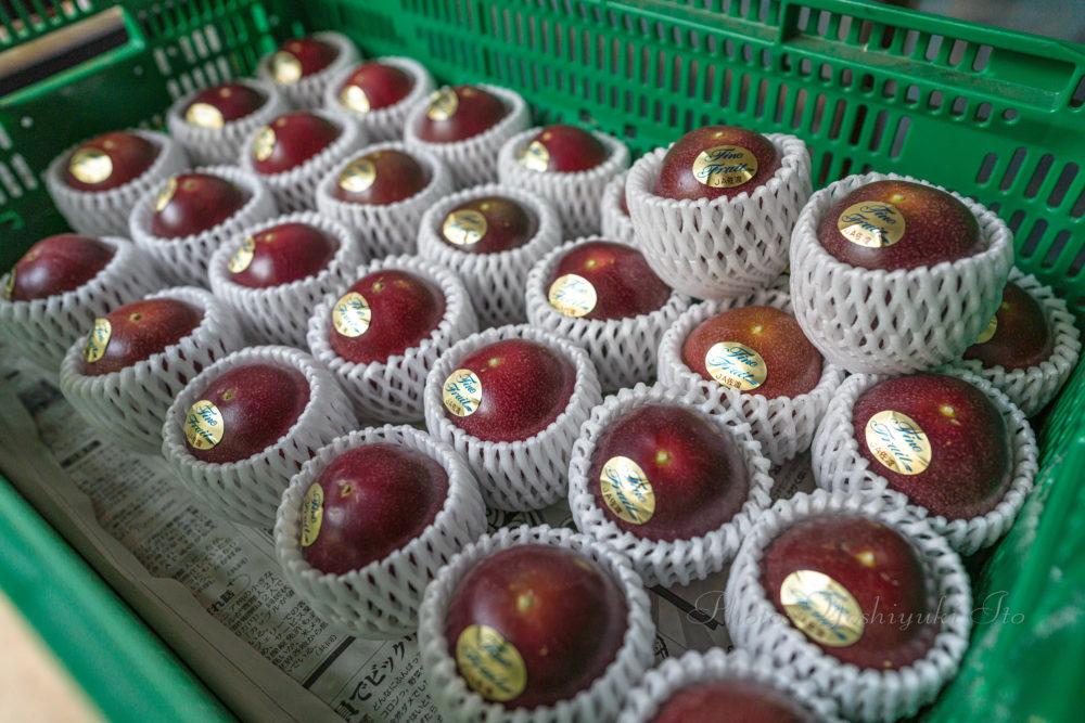 無農薬パッションフルーツ