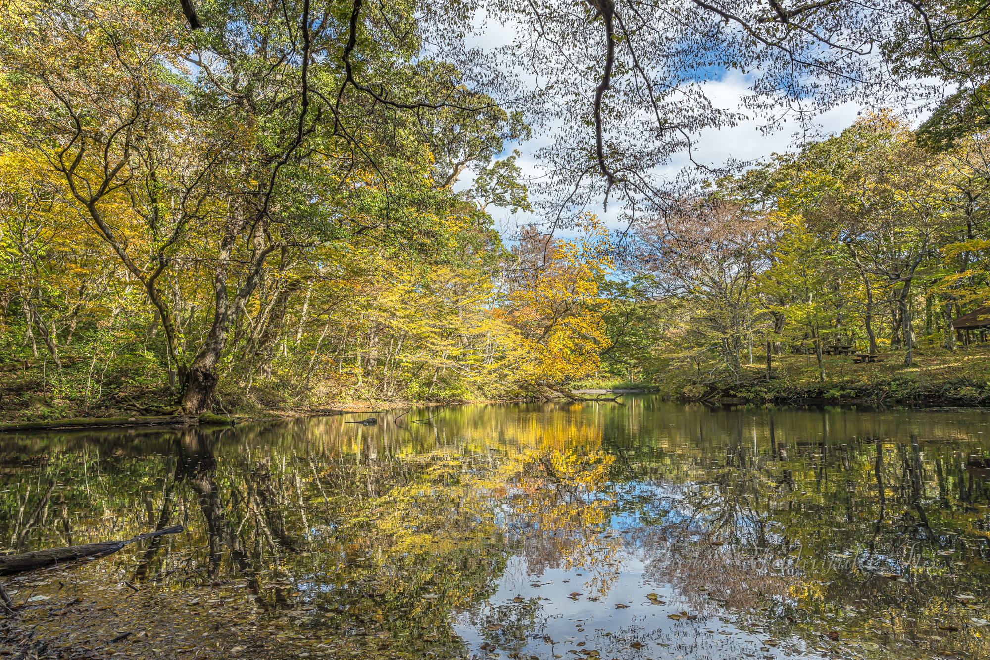 杉池の紅葉